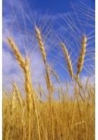 Tarım Kitapları