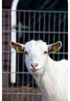 Hayvancılık Kitapları